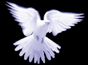 Dove_HolySpirit